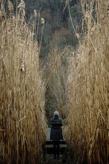 Rear view of woman in high forest of reed