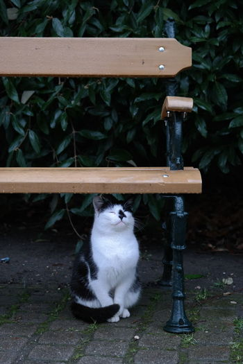 Cat looking away while sitting outdoors
