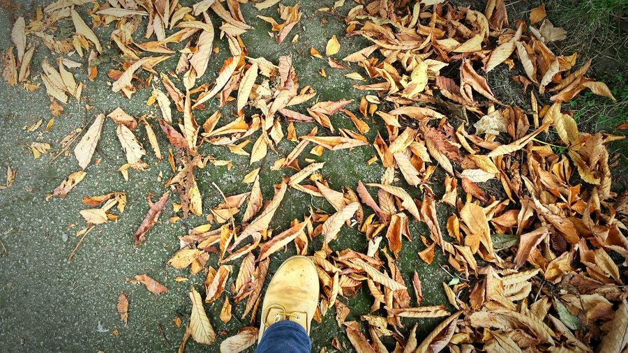 Fall Beauty Kicking the leaves is one I'm sure most of us recall! It's good for the soul! Kicking Leaves Autumn Leaves Walking Through Leaves Crispy Colors Of Autumn Leaves Lookingdown Feet Boots