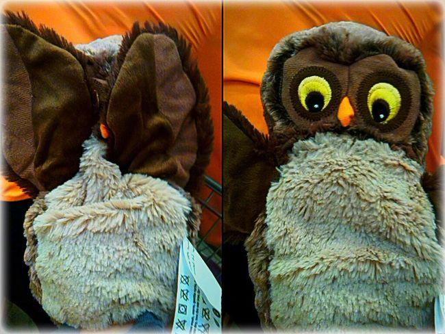 Little owl Overwhelmed Burning Plastic Shopping ♡ Owls Ikea♥ Animals