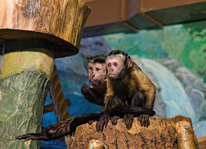 Monkeys sitting in the zoo