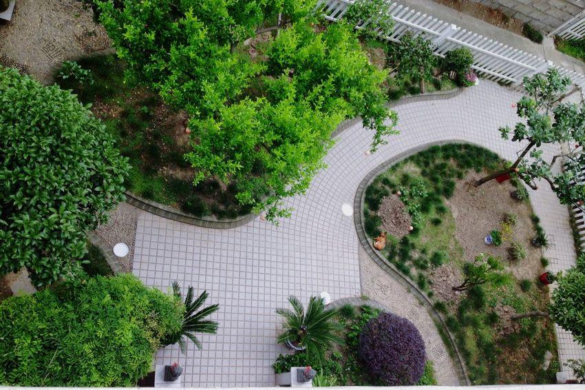 Alterations in the garden China My House My Home Jiaxing Garden Enjoying Life 嘉兴 Beautiful Scenery