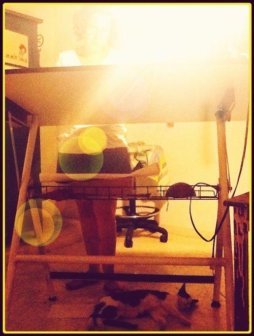 El Atelier Light And Shadow Cat Artist Painter