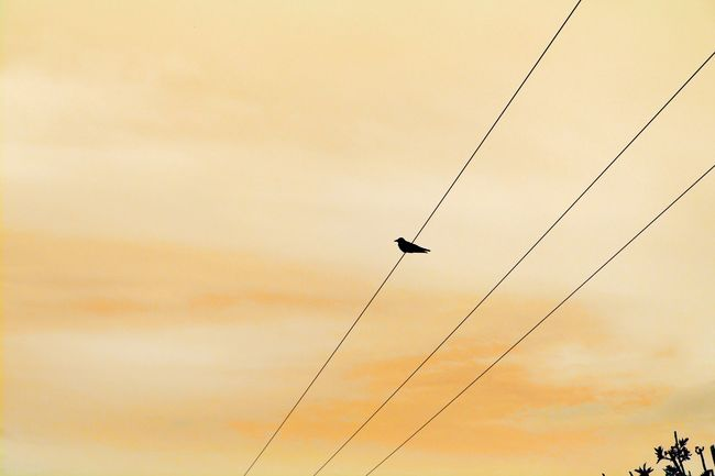 Canon EOS 600D DSLR Simplicity Bird On A Wire Stunning Sky Wirral Peninsula Enjoying Life