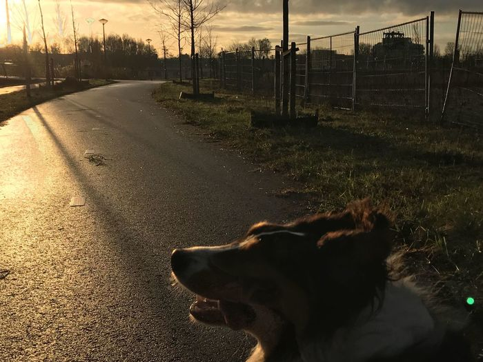 Be. Ready. Dog Domestic Animals Animal Themes Pets One Animal Mammal No People Outdoors Day Pure Photography No Edit/no Filter Amsterdam Australian Shepherd  Sky