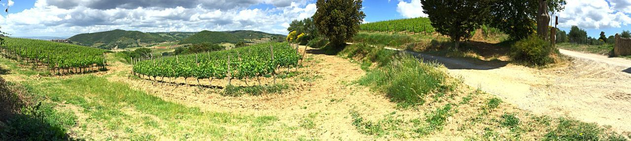 Vigne del Brunello Wine Tasting Exploring Stomping On Grapes Sun Relaxing