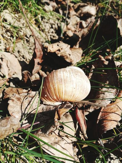 EyeEm Selects Nature No People Outdoors Close-up Beauty In Nature Fragility Snail Snail Shell