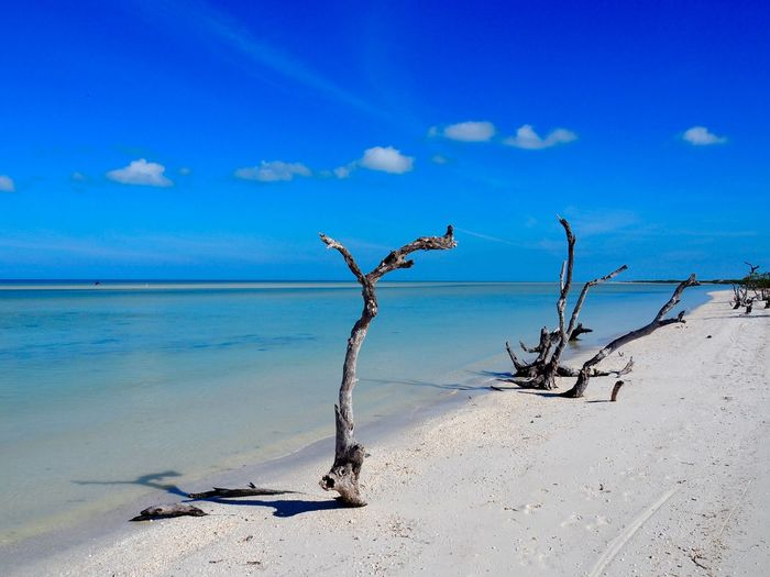 Water Sea Sky Land Scenics - Nature Tranquil Scene Tranquility Blue Beauty In Nature Nature Beach Horizon Day No People Sand Horizon Over Water Cloud - Sky Driftwood Dead Plant Outdoors Arid Climate Copy Space Backgrounds Tropical Travel Destinations