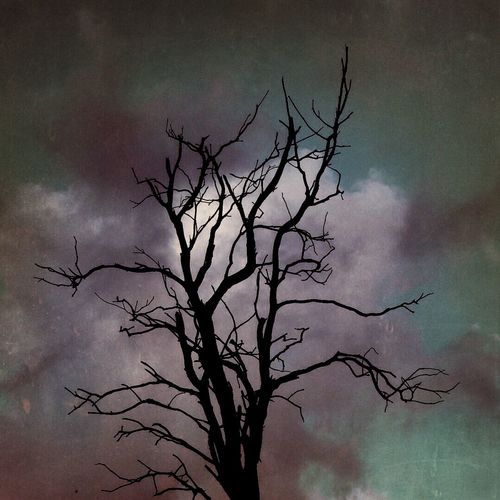 Misery Tree And