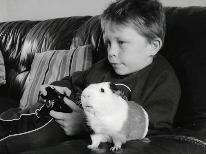 Boy playing video game by guinea pig on sofa at home