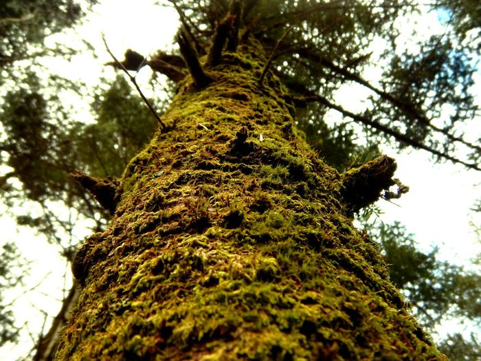The moss. Nature Nature Photography Wonder AW130