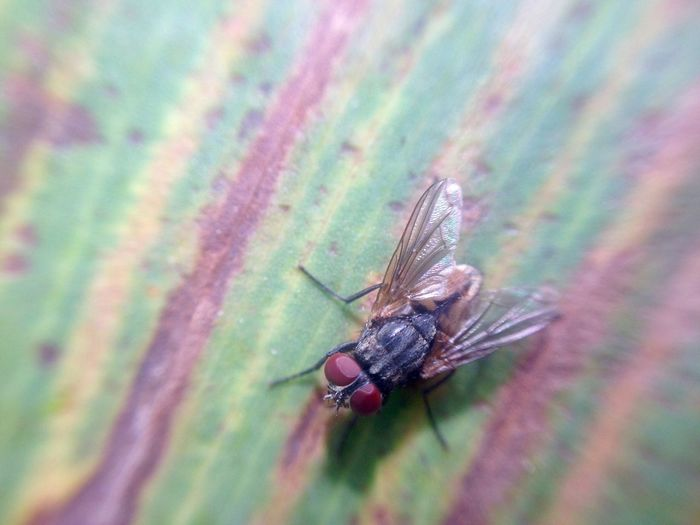 Macro Insect Animal Themes One Animal Animals In The Wild Close-up Nature No People Animal Wildlife Outdoors Day Beauty In Nature Fly Housefly
