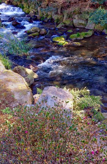 Waliking By The Creek Nature Plant Outdoors Close-up Beauty In Nature Growth Tranquility Grass Day No People