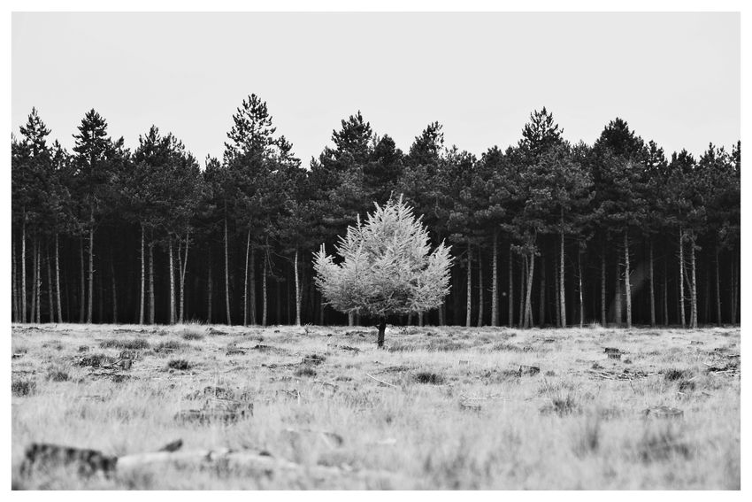 """""""Be different"""" Forest Blackandwhite Blackandwhite Photography Blackandwhitephotography Black And White Black And White Photography EyeEm Best Shots - Black + White Tree Sky Landscape"""