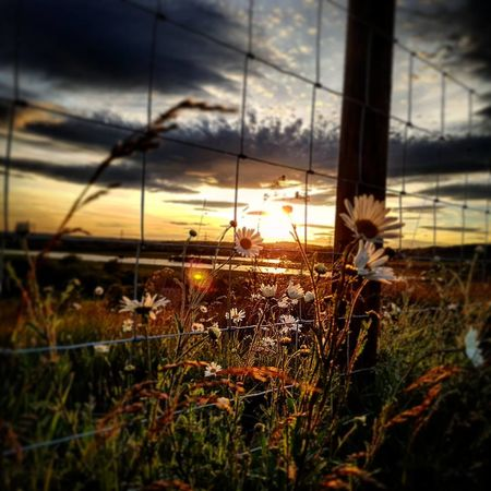 Sunset at Fairburn Ings Nature Nature Photography Naturelovers Nature_collection Nature On Your Doorstep Sunset_collection Beauty In Nature Beautiful Colours Sunset Nature No People Cloud - Sky Sky Growth Grass Beauty In Nature Outdoors Plant Rural Scene Close-up