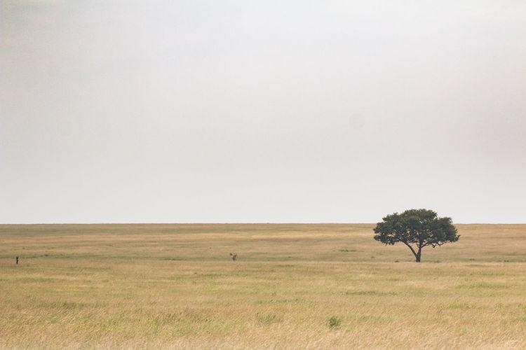 Africa African Safari Empty Landscape Lonely Tree Lonely Tree In Field Nature Ngorogoro Serengeti Serengeti National Park Sky Tanzania Wildlife