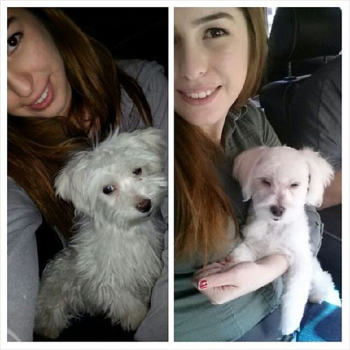 Before and after the groomers :) Raggedy Ratchet to Clean Prince  PuppysOnInstagram