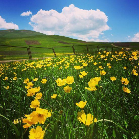 Armenia, mountains, green&yellow