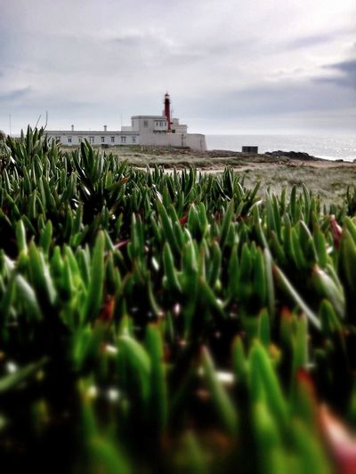 Lighthouse Lighthouse_lovers Caboraso Taking Photos Enjoying Life Check This Out EyeEm Portugal