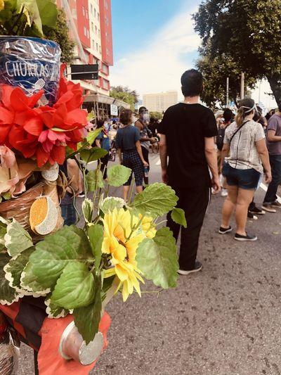 People walking on flowering plants in city