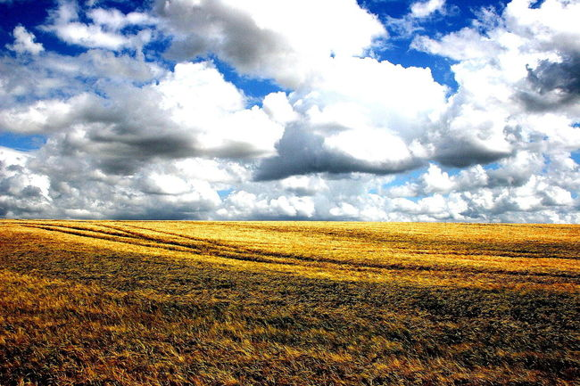 High Contrast Clouds Agricultural Land Agriculture Beauty In Nature Cumulus Cloud Dramatic Sky Farmland Field Landscape Landscape_Collection Nature No People Non Urban Scene Non-urban Scene Oxfordshire UK Rural Scene Scenics Sky Sky And Clouds The Cotswolds Weather Yellow