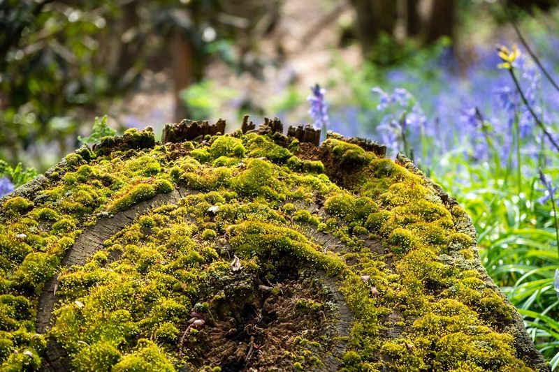 Plant Green Color Growth Close-up Beauty In Nature Nature Focus On Foreground No People Day Moss Outdoors Tree Sunlight