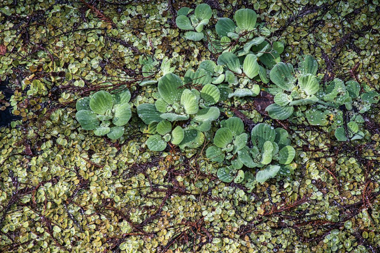 FULL FRAME SHOT OF FRESH GREEN LEAVES ON PLANT
