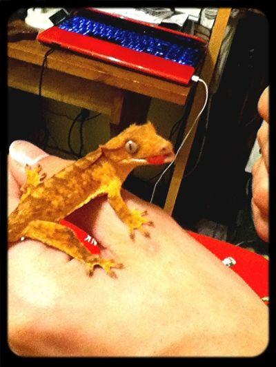 Feed Lizard