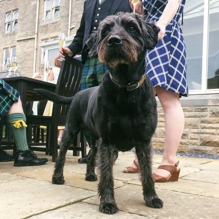 Lily, wedding dog Dog Legs Feet Champagne Champagne Glasses Kilt Shoes Celebration Wedding Scottish Scotland Holding Outside Outdoors Summer Hotel Building Exterior Wall Bright Nairn North Scotland Summer Dogs
