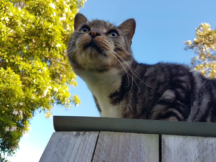 Cat Lovers Sky No People Animal Themes Low Angle View Mammal Close-up Focused