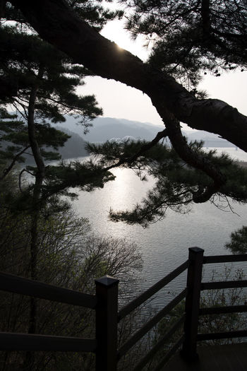 view at Tangeumdae in Chungju, Chungbuk, South Korea Beauty In Nature Branch Close-up Day High Angle View Namhangang Nature No People On The Cliffs Outdoors Railing River Riverside Scenics Sea Sky Tangeumdae Tranquil Scene Tranquility Tree Water Yeouldudae