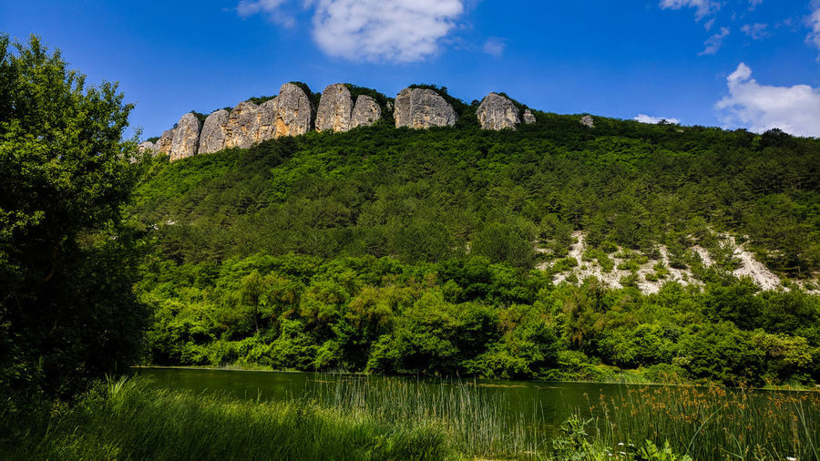 Scenic view of plants growing on mountain in forest