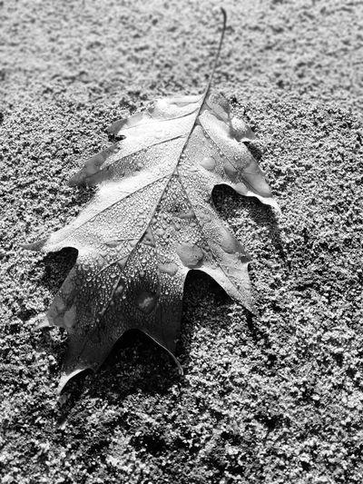 Autunno Marrone Foglie Morte Autunno🍁🍁🍁 Fogliediautunno Sole Goccie D'acqua Water High Angle View Close-up