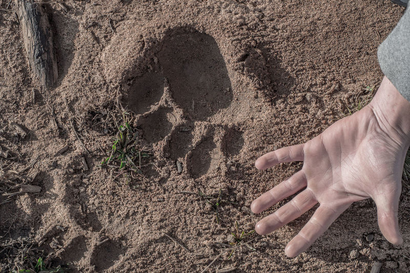 Close-up Of Human Hand On Sand