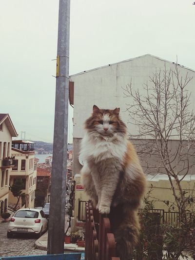Domestic Cat Domestic Animals Mammal One Animal Pets Feline Animal Themes Building Exterior Built Structure Architecture Day No People Outdoors City Sky