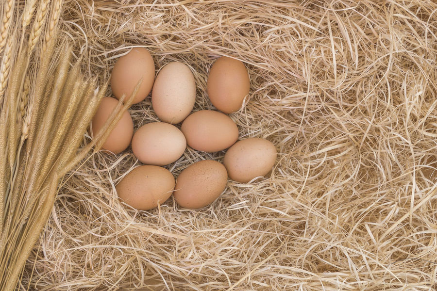 Animal Egg Bird Nest Brown Close-up Day Egg Food Food And Drink Fragility Freshness Hay Healthy Eating High Angle View Indoors  Nature New Life No People Straw