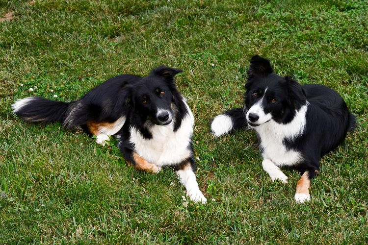 High angle view of two dogs sitting on grass