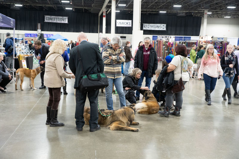 Group of people at dogs