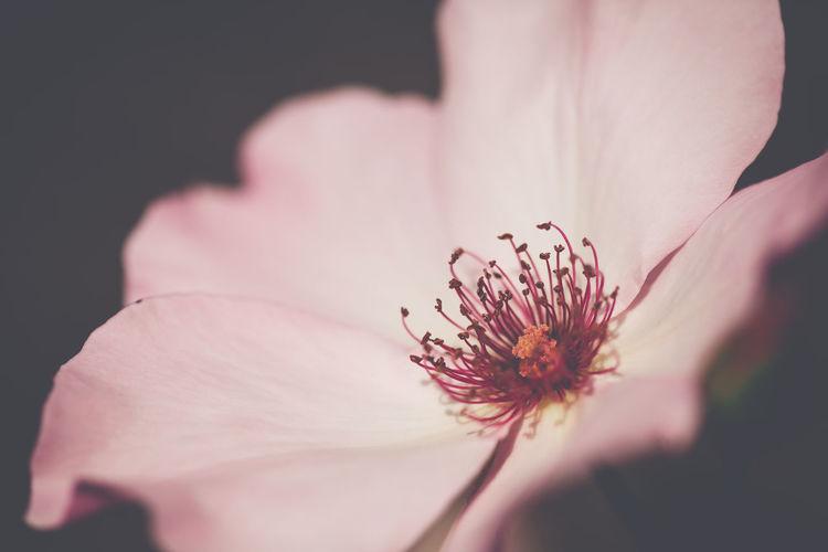 ここから90mmマクロに替えました Taking Photos Relaxing Flowers Beauty In Nature EyeEm Nature Lover Color Of Life EyeEm Best Shots Beautiful Day EyeEm Gallery Roses