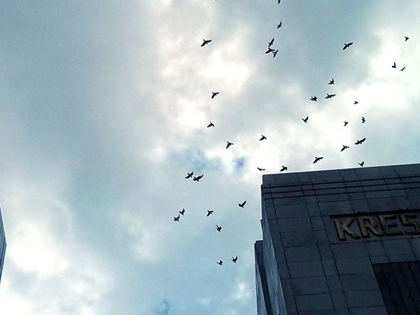 Birds🐦⛅ Downtown Cloudy Day Watching A Parade Check This Out Relaxing