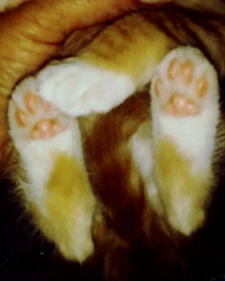 Baby Paws....precious 💚💜💙💛 Kittyporn Kttypaws Kittensofinstagram Kitten Love Gingerkitty