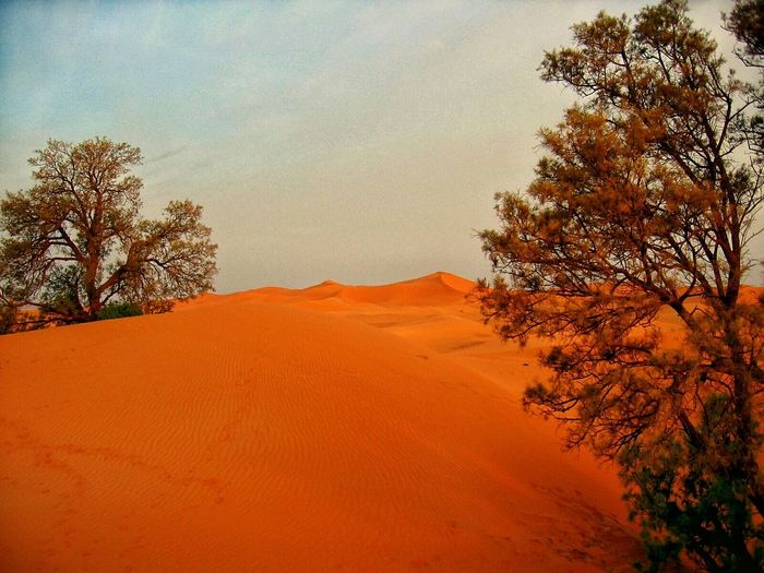 Deserts Around The World Dunes Of Merzouga Tree Enjoying Life Point Of View What I Value Marroco