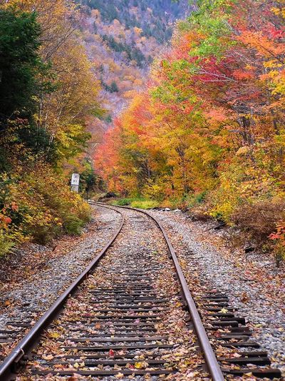 Fall Foliage Autumn🍁🍁🍁 Autumn Autumn Colors Autumn Leaves Fall Beauty Fall Colors Train Tracks Railroad Track New Hampshire North Conway Mountains Nature Photography Lamdscape New England Foliage Beauty Beauty In Nature Orange Color GayneGirlPhotography EyeEm Nature Lover EyeEm Best Shots EyeEm Gallery EyeEmBestPics EyeEm EyeEm Best Shots - Nature