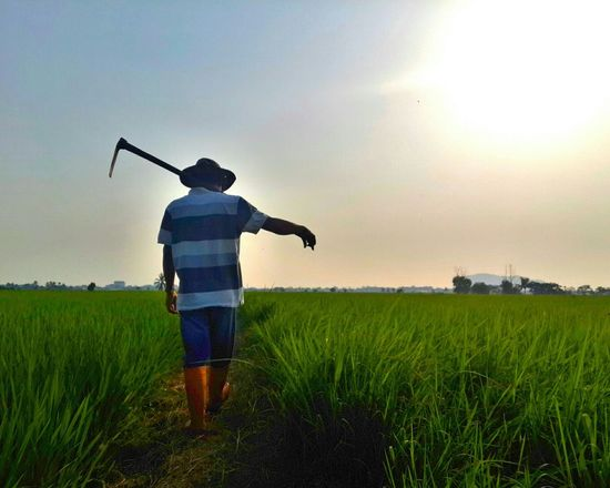 This is my Freelance Life. As a Farmer, We grow our own food-salary. Living by the Beauty of Paddy Field. Working with the accompany of Mother Nature. Bestfeelingintheworld