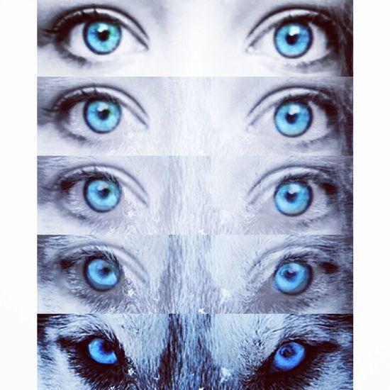 Hi! Blue Eyes Look Into My Eyes... Taking Photos