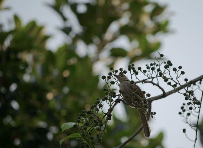นก สัตว์น้อยร่วมโลก นก น่ารัก สัตว์โลกน่ารัก Animal Bird Perching Living Organism EyeEmNewHere