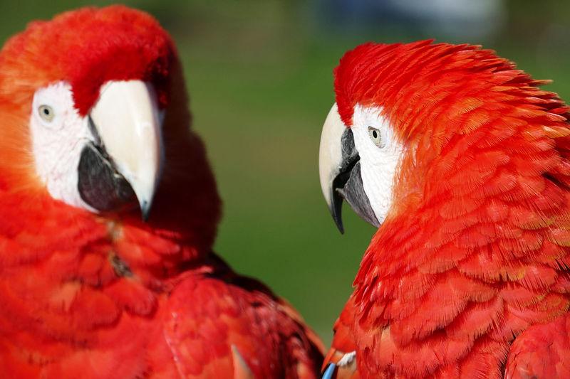 """Lovebirds III"""