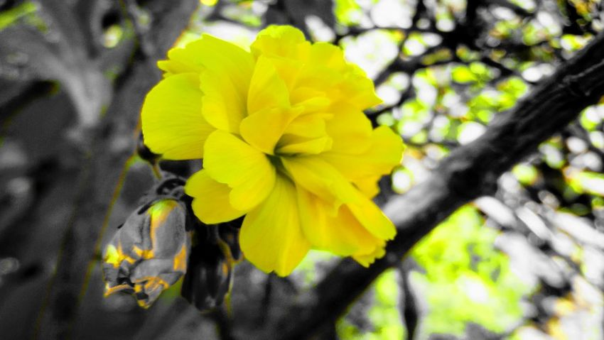 Flower Yellow Fragility Nature Petal Outdoors Beauty In Nature