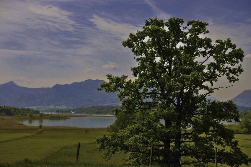Chiemsee Beauty In Nature Lake Landscape Mountain Nature No People Sky Tree Water