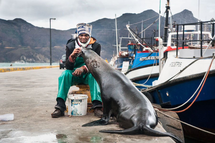 Sealife Seal Pier Harbour Capetown Houtbay Southafrica Fisherman Telling Stories Differently Feel The Journey EyeEm X ICP - Telling Stories Differently